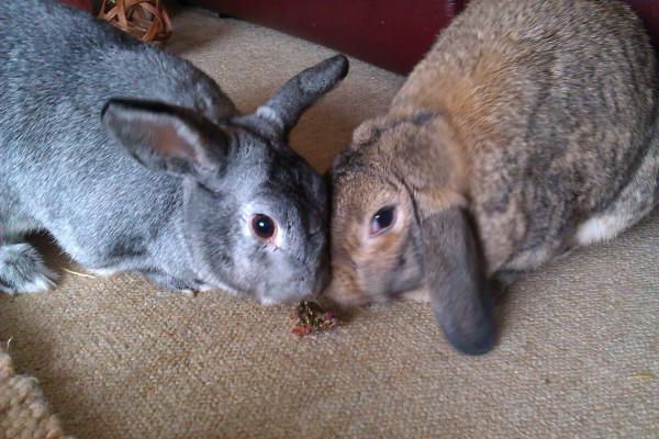 bunny Camp Present 9