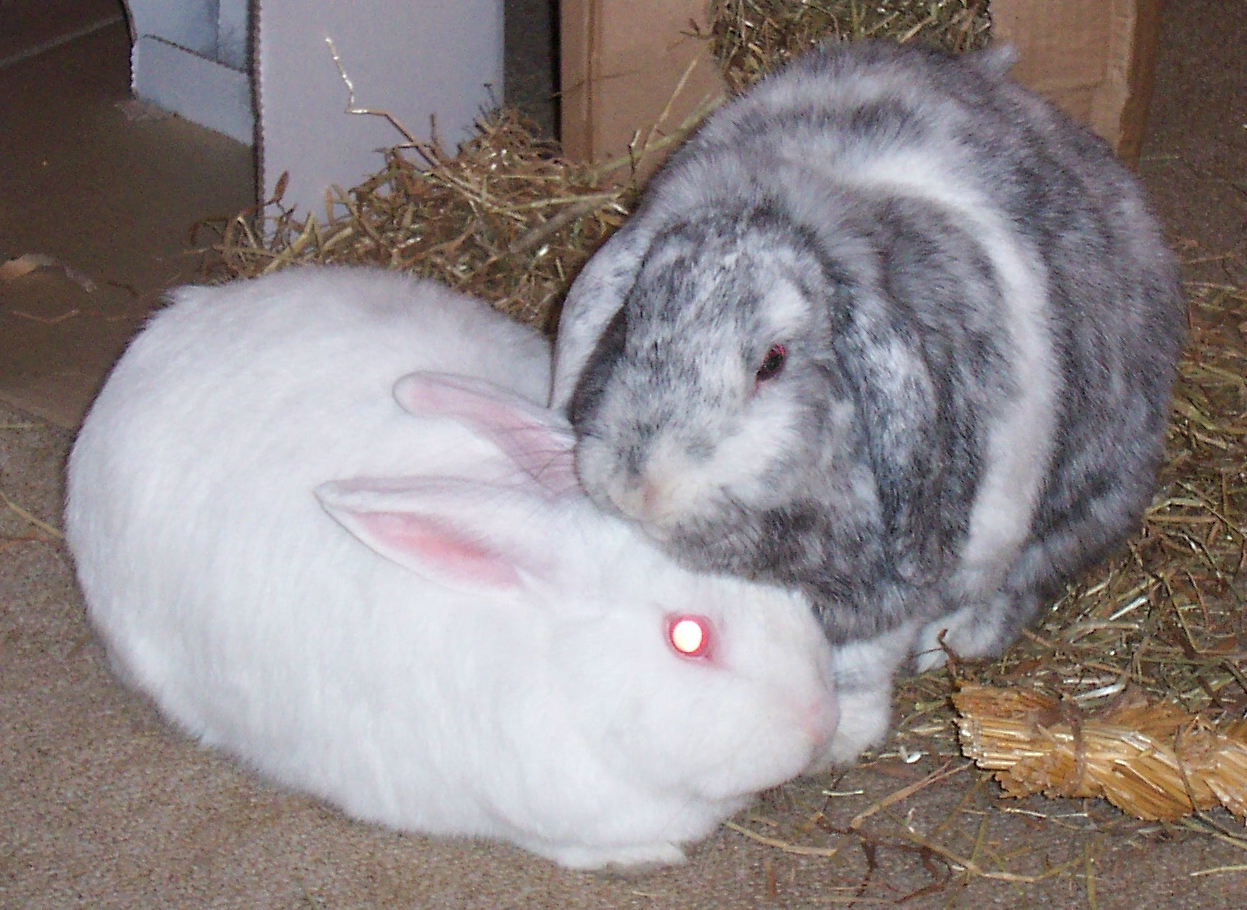 bunny and clyde.JPG