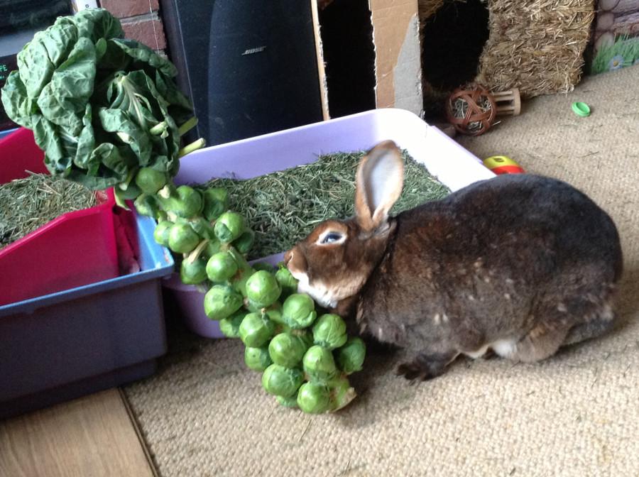 ceddysprout