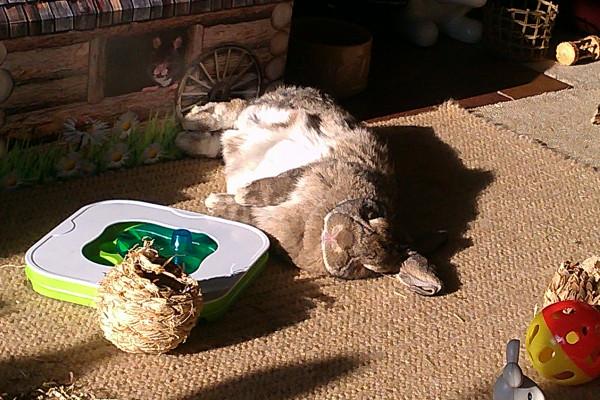 annie sunbathing