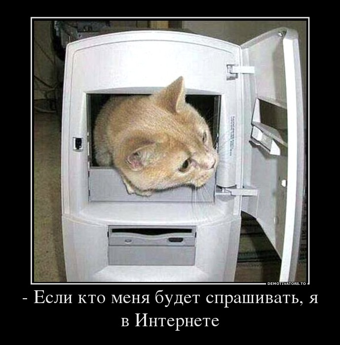 69875060_-esli-kto-menya-budet-sprashivat-ya-v-internete