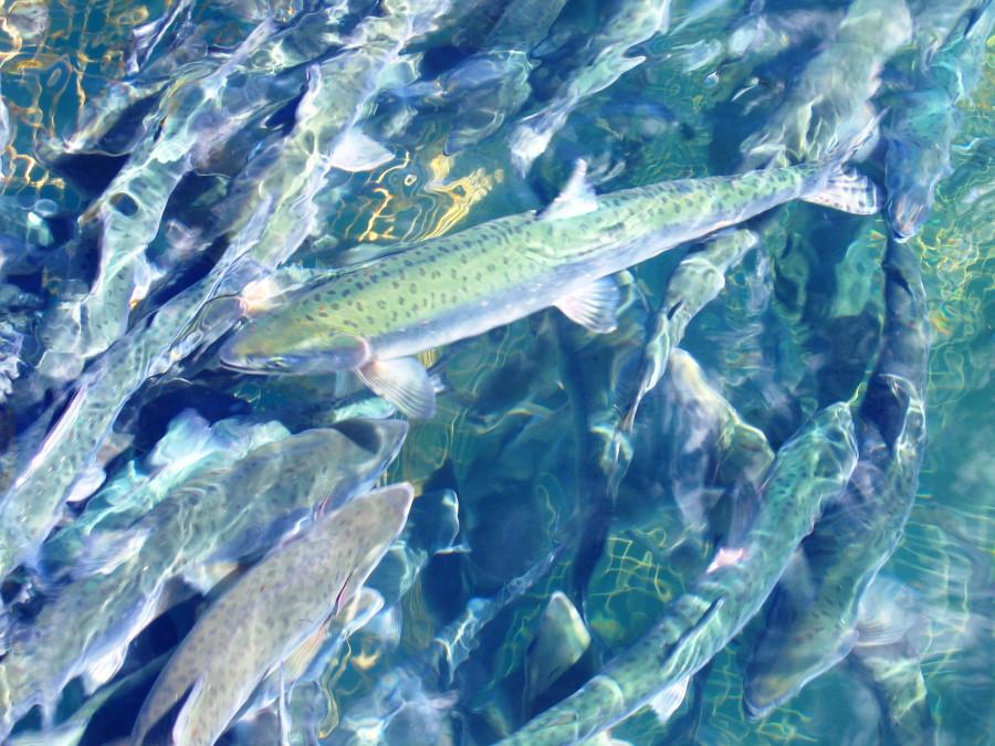 Итуруп.Июль2006 320