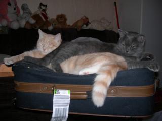 Дело не в том, что они лежат на чемодане, а в том, КАК они лежат