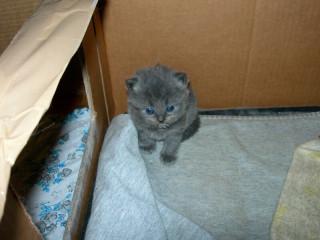 Тимошка примерно в возрасте 1 месяца :)