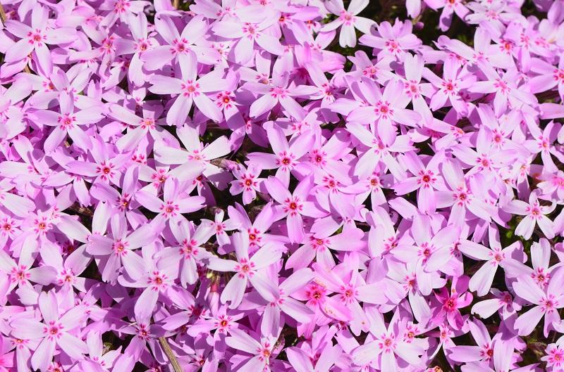 spring_5
