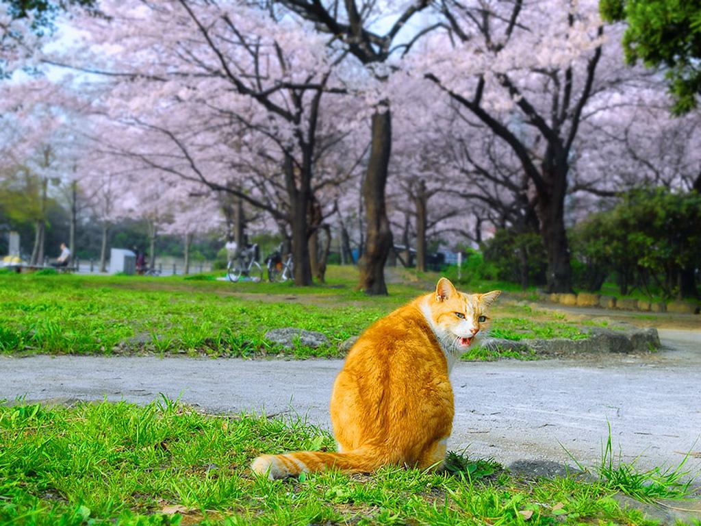d@ra_cats(0)