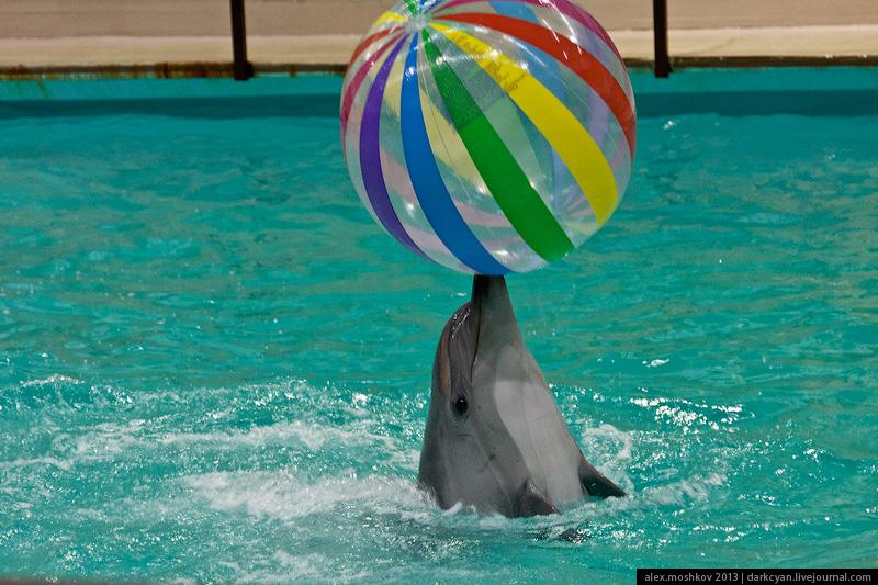 геленджик дельфинарий сколько стоит фото местному