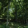 sunlight dappled woods