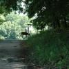 look, a deer!