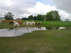 alpaca lake