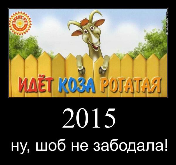 Koza_D