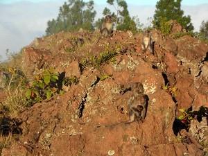22 July 2012_Pre-Dawn Trek Mt Batur for Sunrise (9)