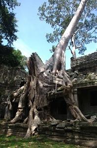 Preah Khan - Crushing Tree Roots 2