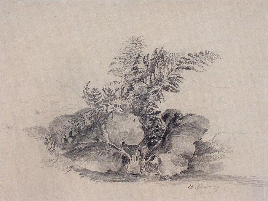 Листы папоротника и лопуха. 1854
