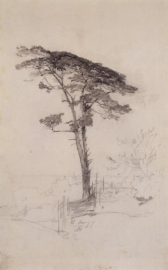 Сосна. 1854