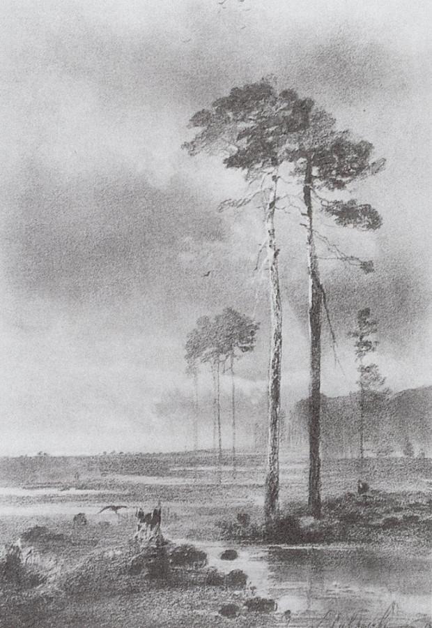 Сосны у болота. 1882