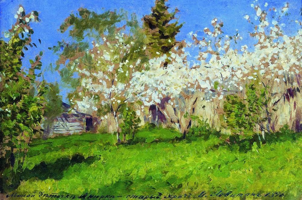 Цветущие яблони1. 1896