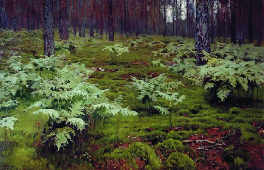 Папоротники в лесу. 1895
