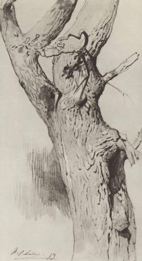 Ствол старого дерева. 1883