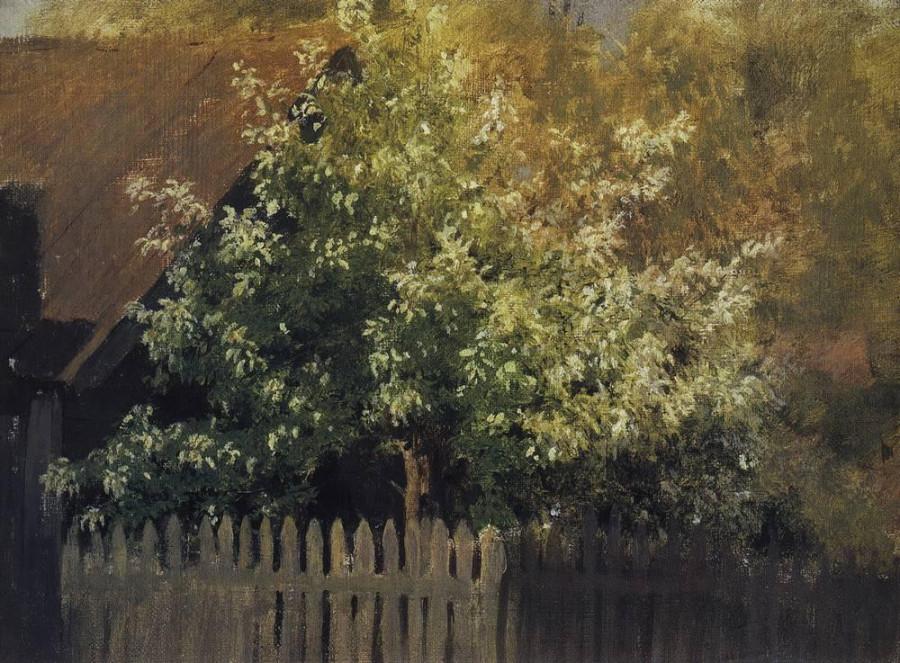 Черемуха. Начало 1880-х
