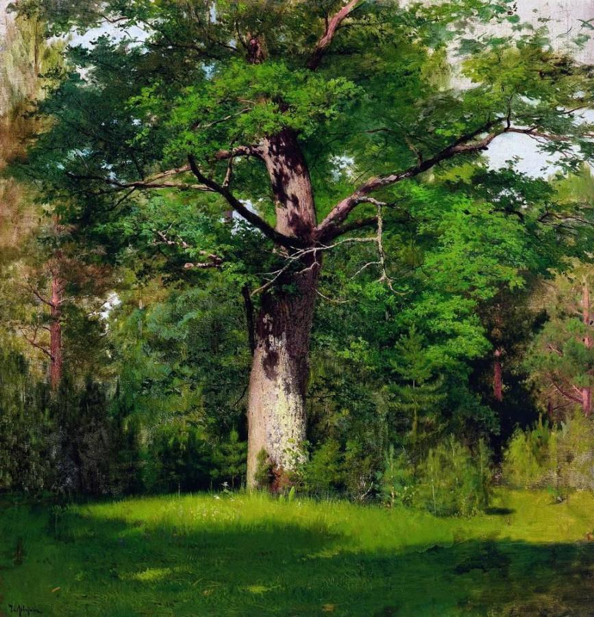 Дуб. 1880