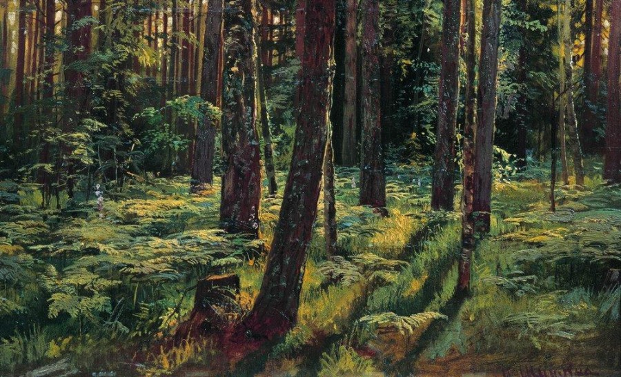 Папоротники в лесу. Сиверская. 1883.jpg