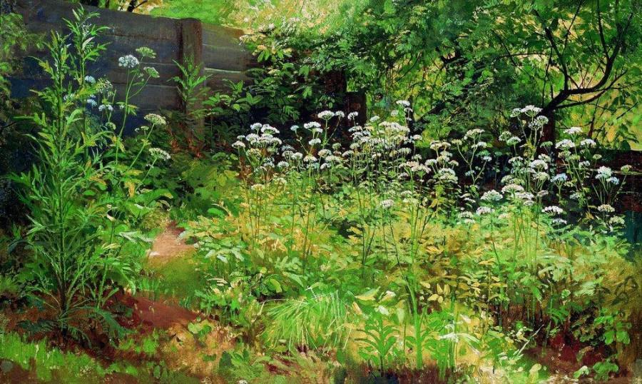 Сныть-трава. Парголово. 1884-1885.jpg
