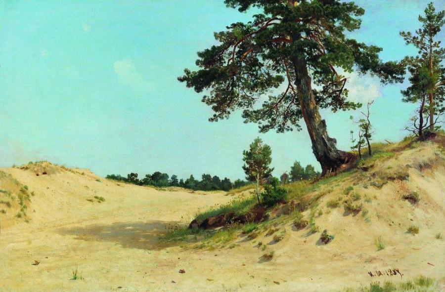 Сосна на песке. 1884.jpg
