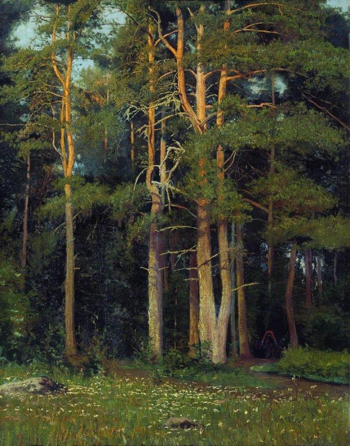 Сосновый бор у Лигова. 1895.jpg