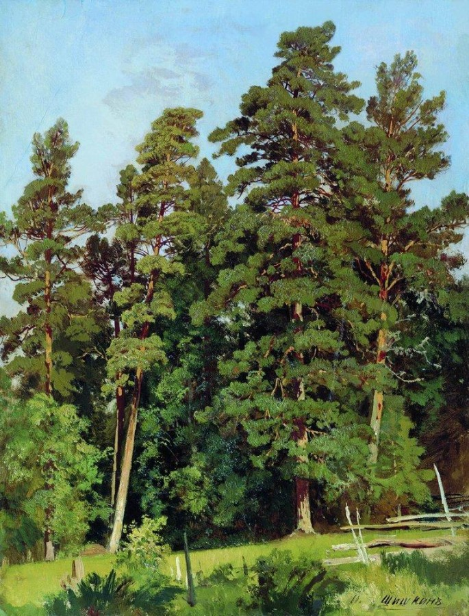 Сосновый лес2.jpg
