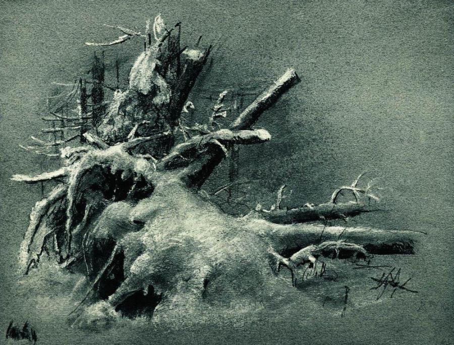 Выкорчеванные пни под снегом. 1890-е