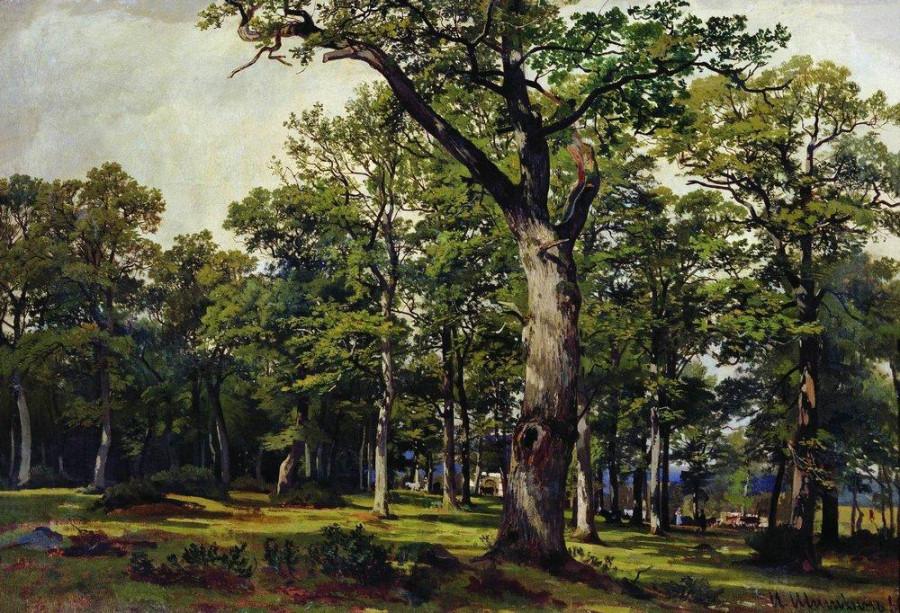 Дубовый лес. 1869