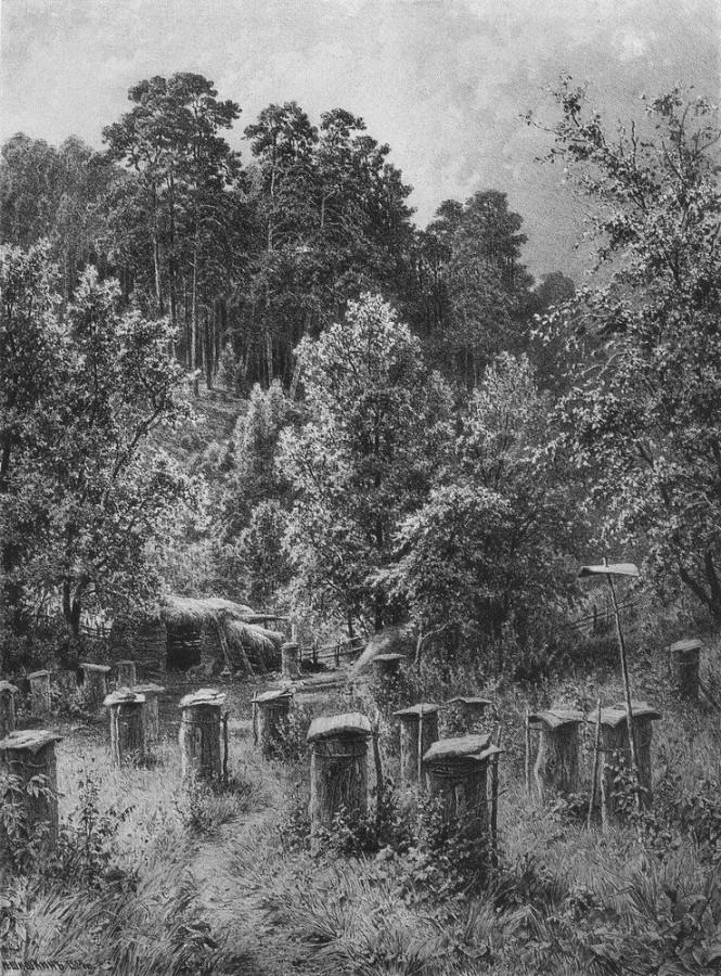 Пасека. 1884