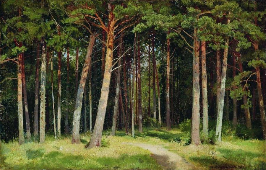 Сосновый лес1. 1885