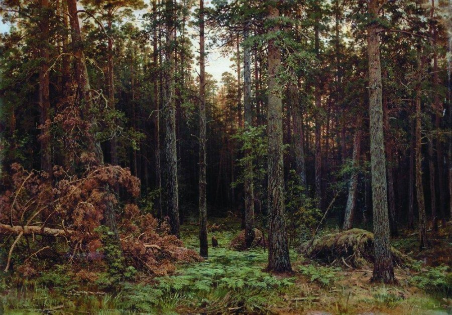 Сосновый лес2. 1885