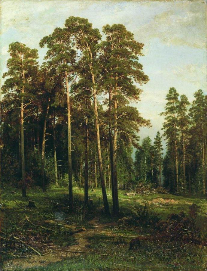 Сосновый лес3