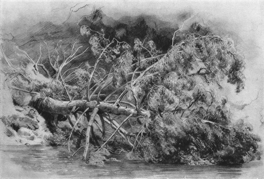 Упавшее дерево. Сиверская. 1879