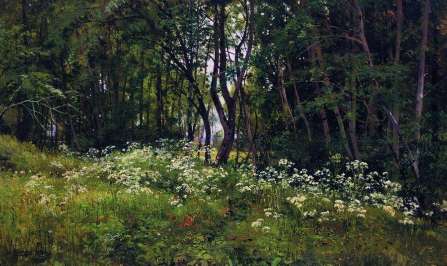 Цветы на опушке леса. 1893
