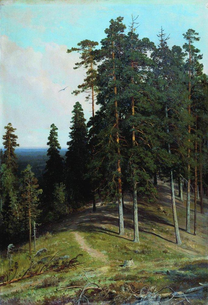 Лес с горы. 1895