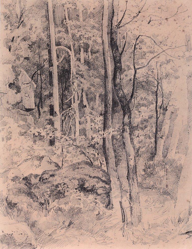 Лес. Начало 1870-х