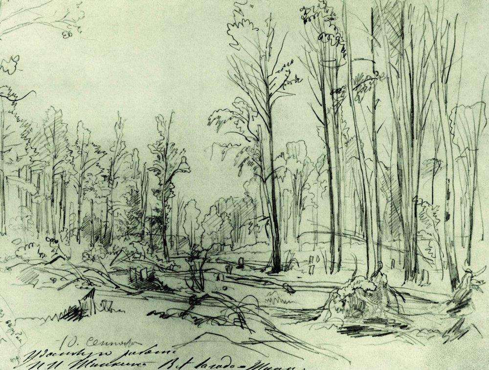 Лесная вырубка. 1870-е