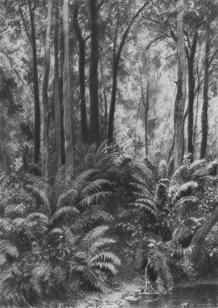 Папоротники в лесу. 1877