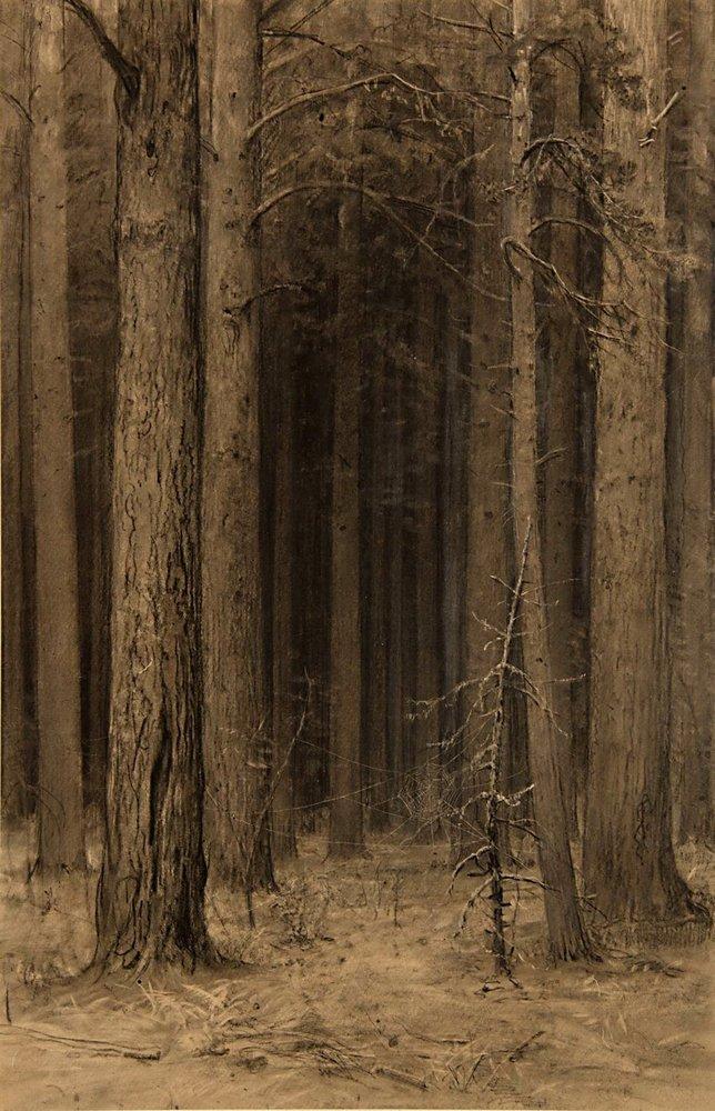 Паутина в лесу. 1880-е