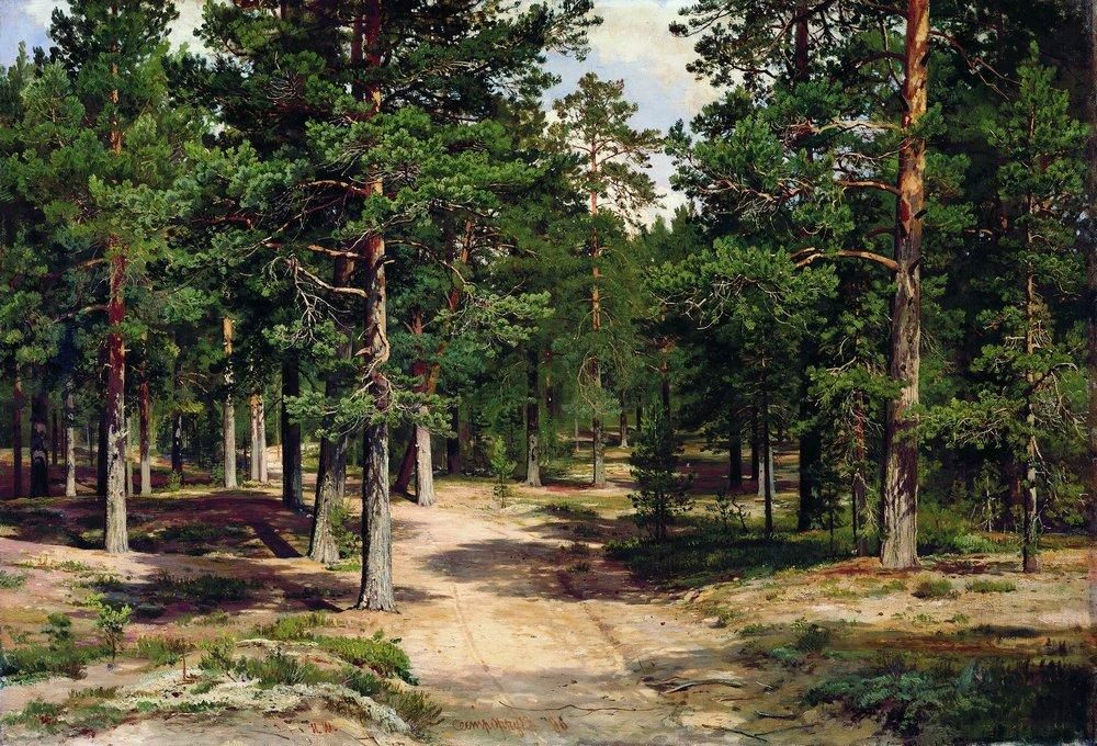 Сестрорецкий бор. 1896