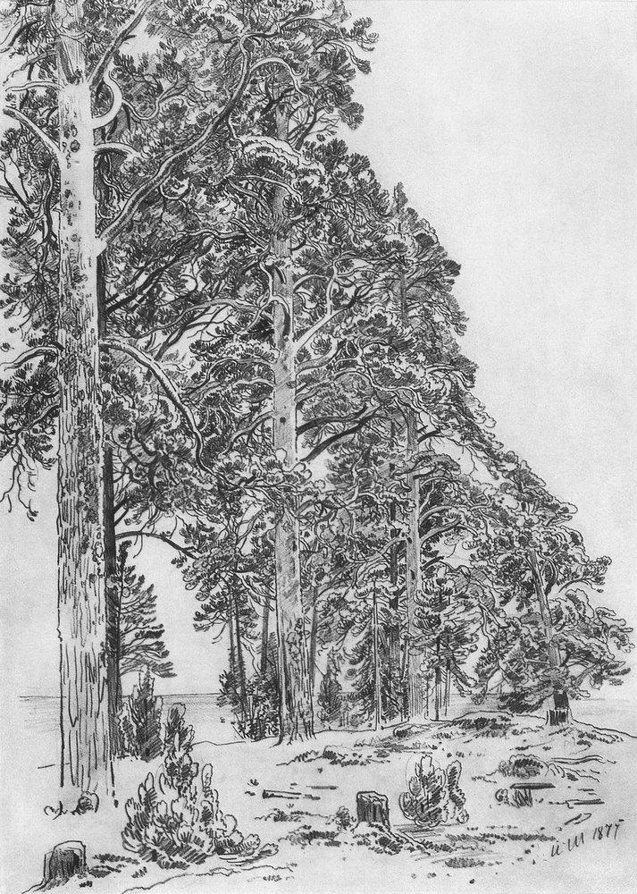 Сосны на взморье. 1877