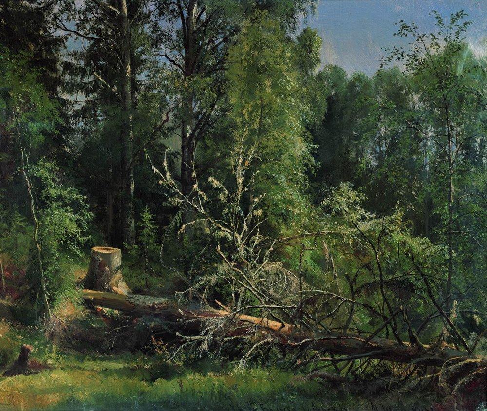 Срубленное дерево. 1875
