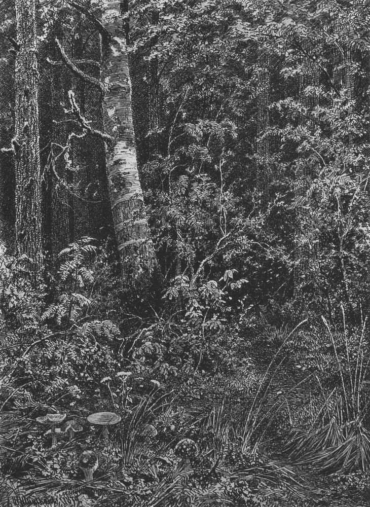 Чаща. 1879