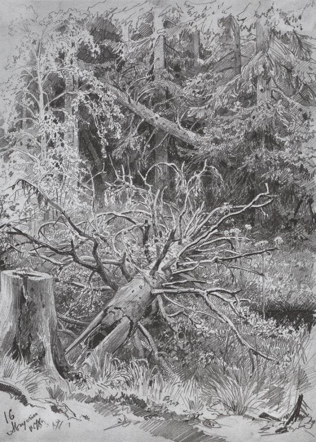 В лесу. Упавшее дерево. 1878