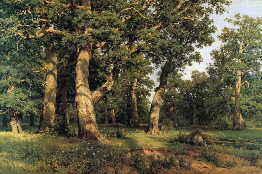 Дубовая роща. 1887