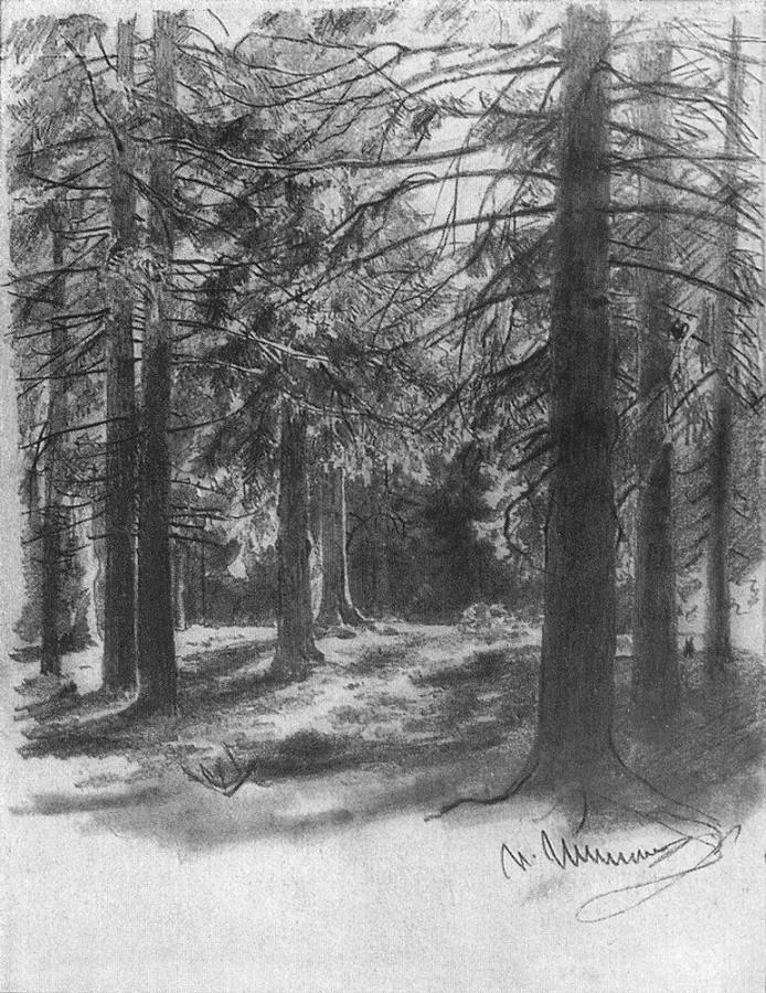 Ели, освещенные солнцем. 1880-е
